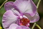 5 points clés pour une orchidée en bonne santé